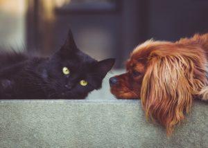 Przewóz zwierząt za granicę - co musisz wiedzieć?